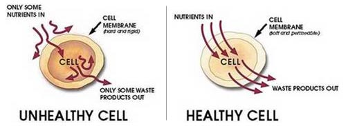 Unhealthy cell that let in only some nutrients and out only some waste. And a healthy cell that let nutrients in and waste out thanks to a good diet.